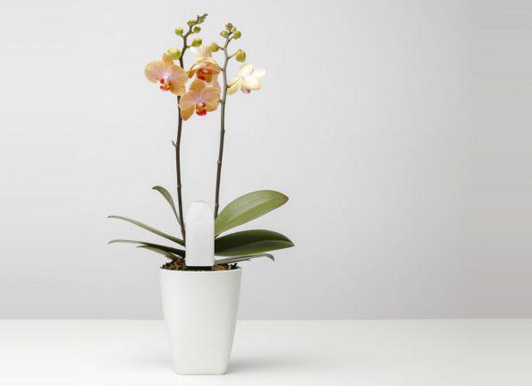 Xiaomi Flora Plant Sensor
